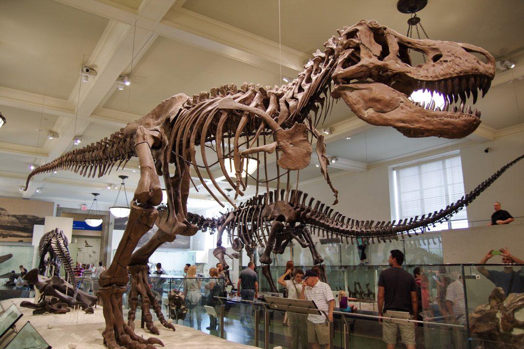 Squelette de tyranosaure au Museum d'Histoire Naturelle de New York