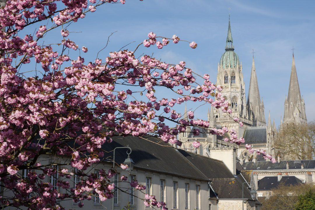 cathédrale de bayeux avec des cerisiers en fleurs