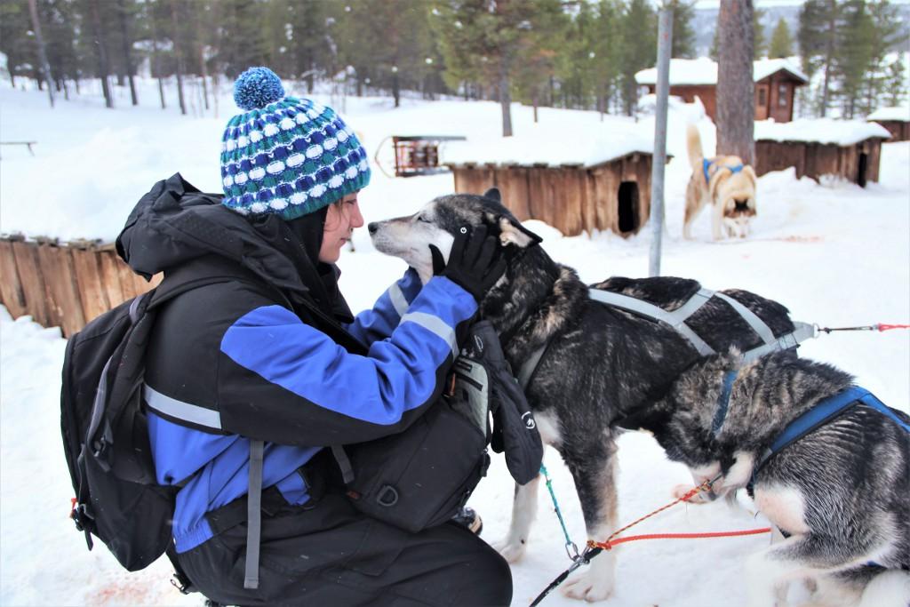 Balade en chien de traineau en Laponie par My Little Road