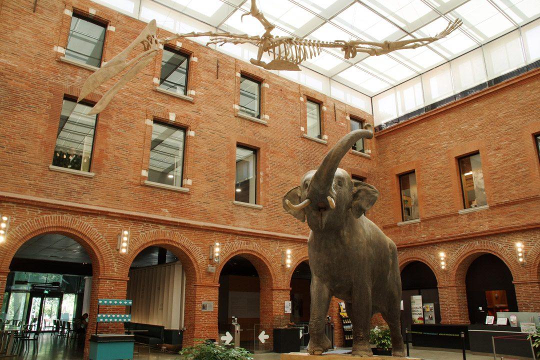 Hall d'entrée du muséum d'histoire naturelle de Toulouse