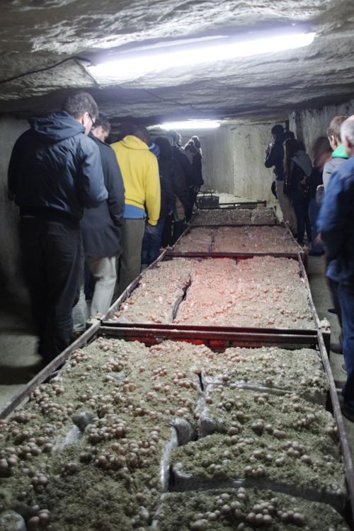 Visite cave de champignon de Paris dans le Loir et Cher