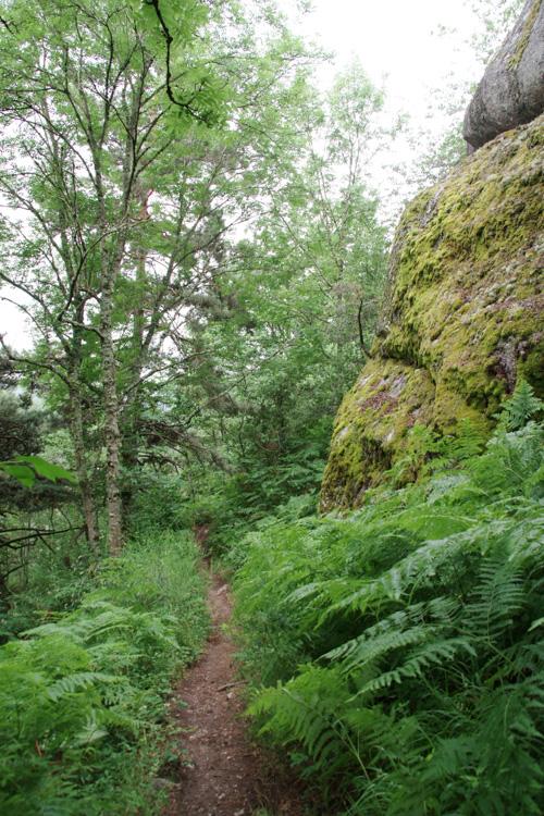 Traversée de forêt sur le chemin de Compostelle