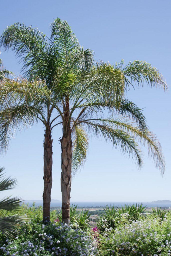 Palmier dans le jardin du Castel Sainte Claire à Hyères