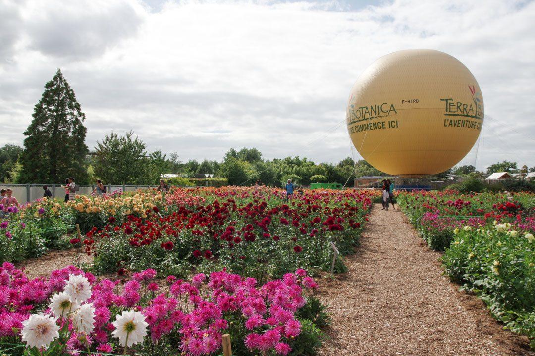 champs de dahlias à Terra Botanica à Angers
