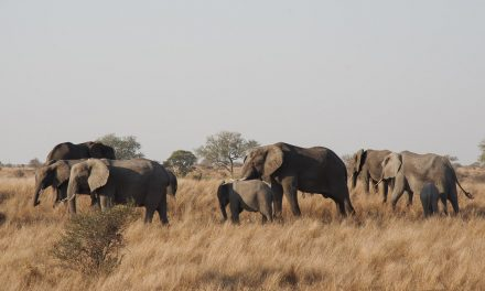 Itinéraire de 3 semaines en Afrique du Sud