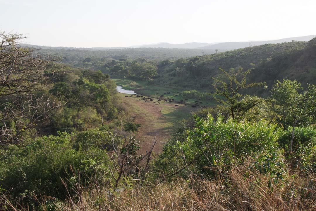 réserve naturel de Hluhluwe dans le Kwazulu-Natal