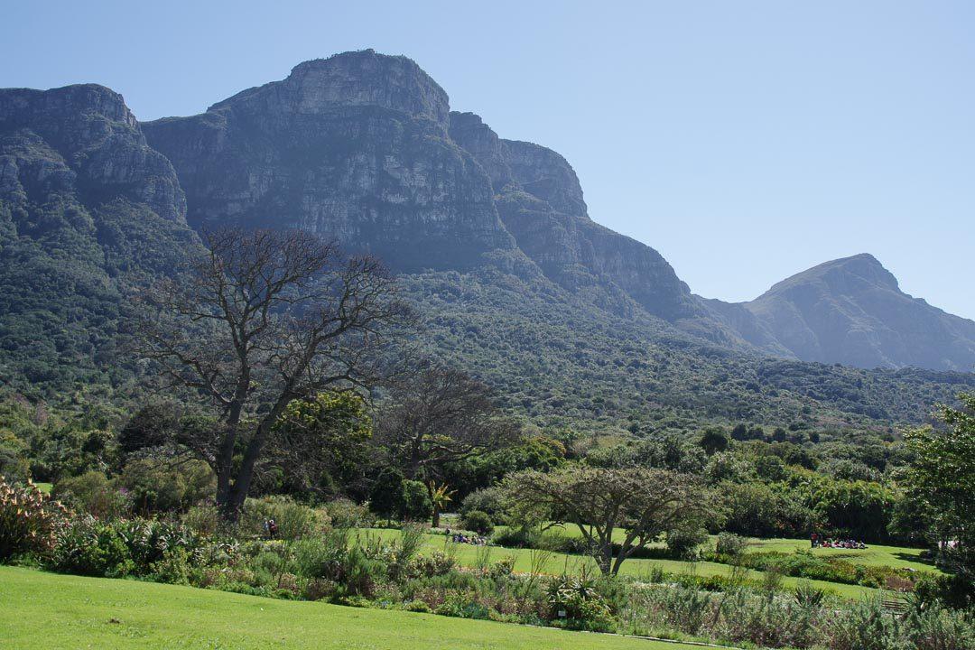 le jardin botanique de Kirstenbosch