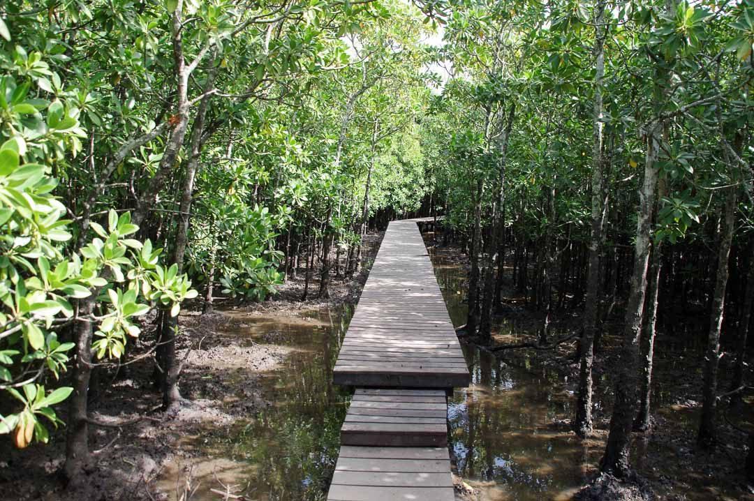 balade dans la mangrove d'umlalazi nature reserve