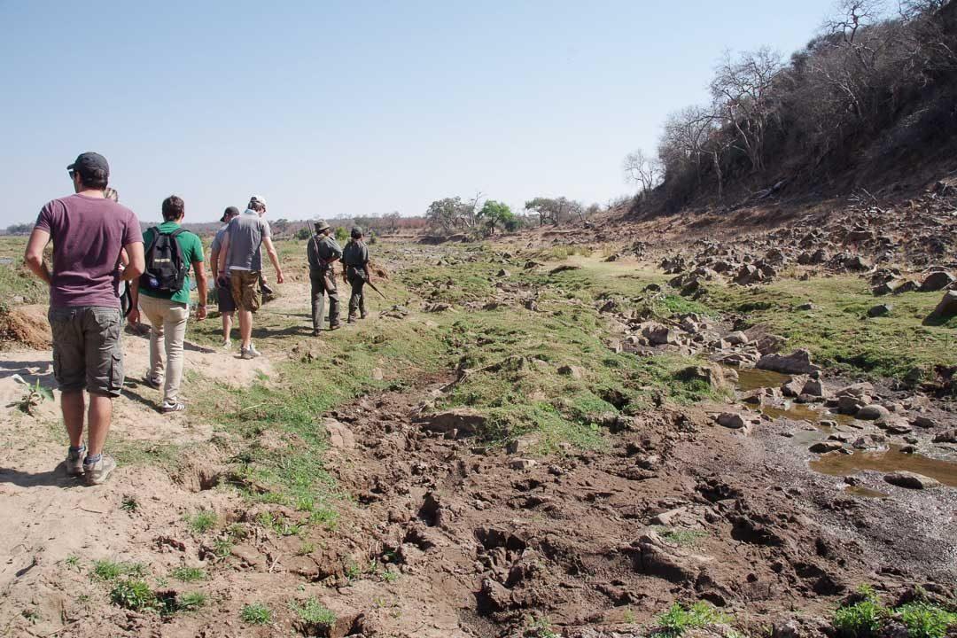 randonnée encadrée par des rangers au Parc Kruger