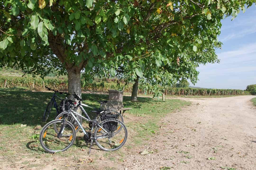 Balade à vélo dans les vignobles près de Dijon