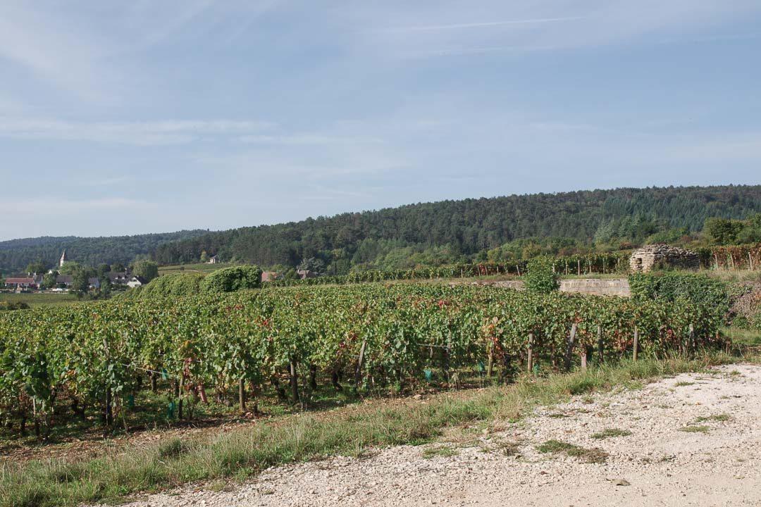 paysage des vignobles de la Côte de Nuits
