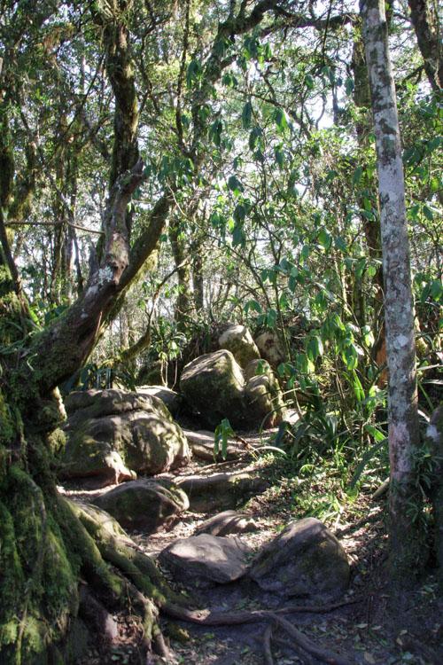 balade dans la forêt pour rejoindre le point de vue de God's Window