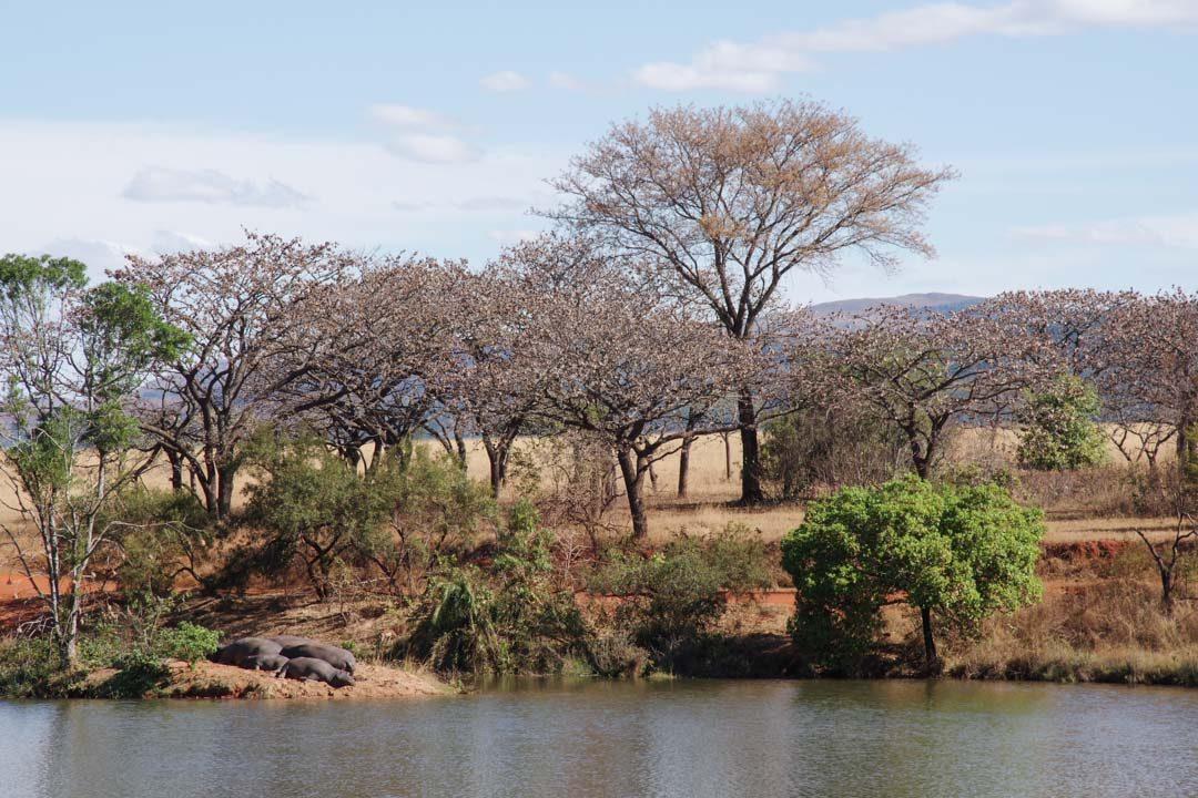 La Mare des Hippopotames - Mlilwane Wildlife Sanctuary