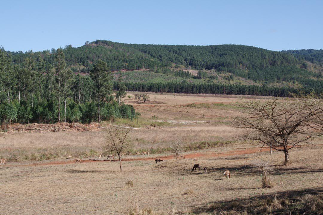 Mlilwane Wildlife Sanctuary - Swaziland