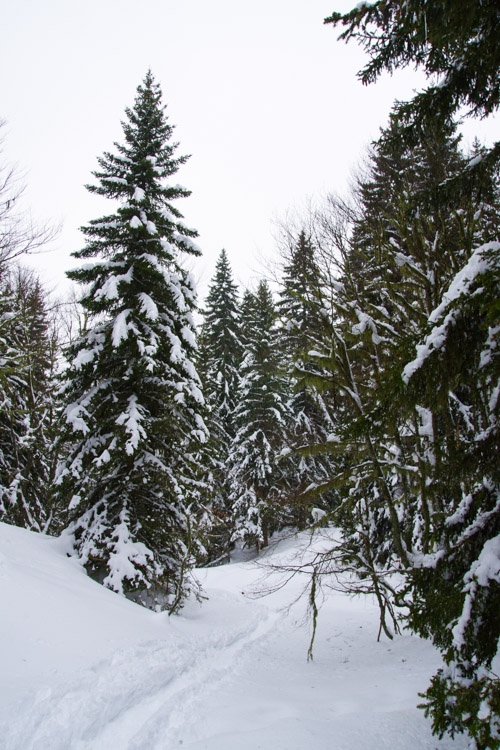 paysage de montagne avec les sapins sous la neige