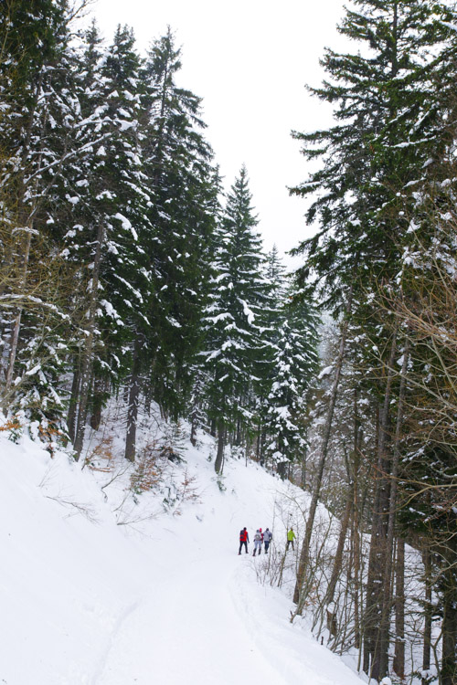 chemin de randonnée raquette du plateau de la Moliere