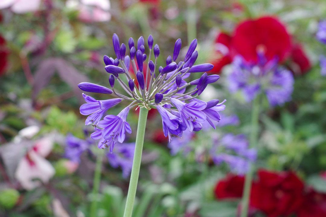 Fleur - Terra Botanica - Angers