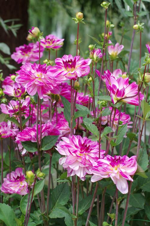 fleurs - Terra Botanica