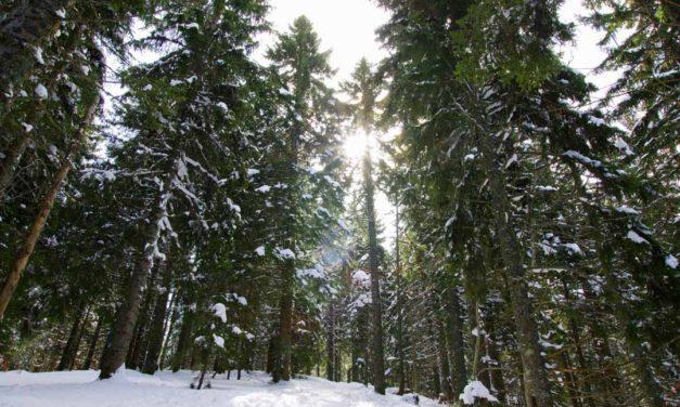2 itinéraires de randonnées raquettes dans le Vercors