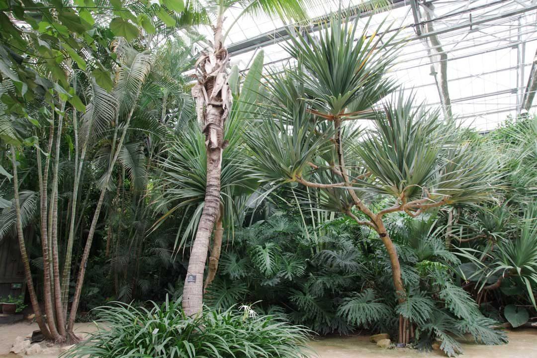 la grande serre du Trésor de la Pérouse - Terra Botanica