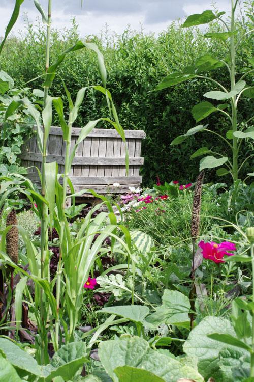 jardin potager - Terra Botanica
