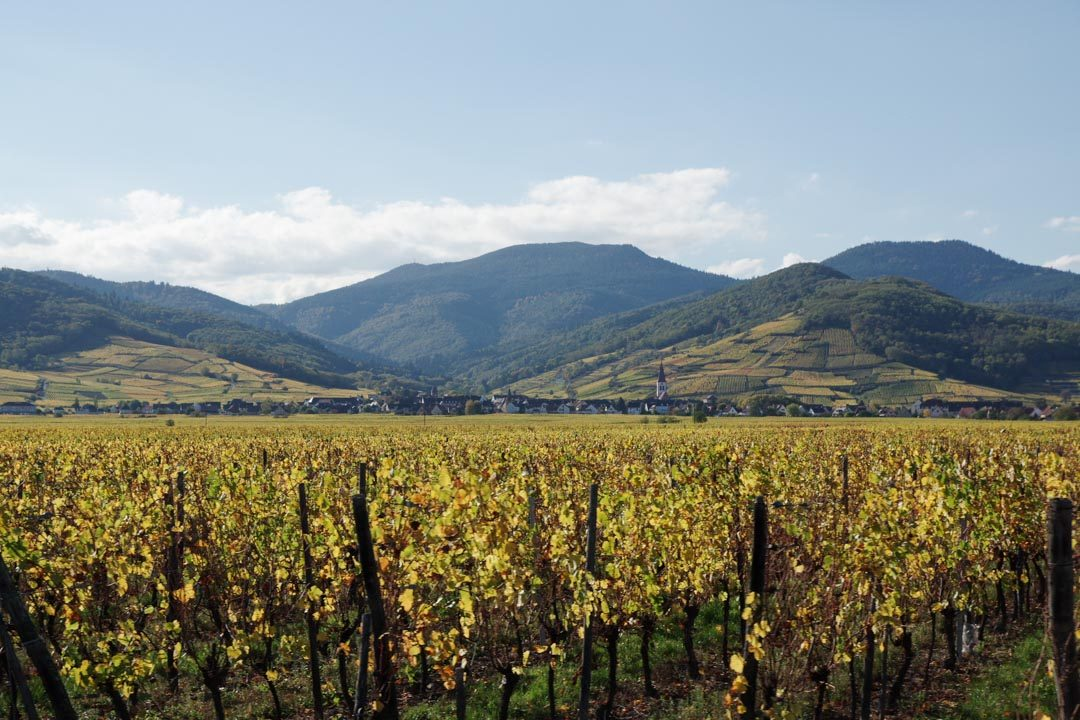 les vignobles d'Alsace en Automne