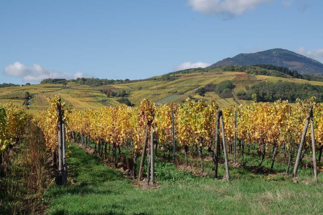 La route des vins d'Alsace en automne