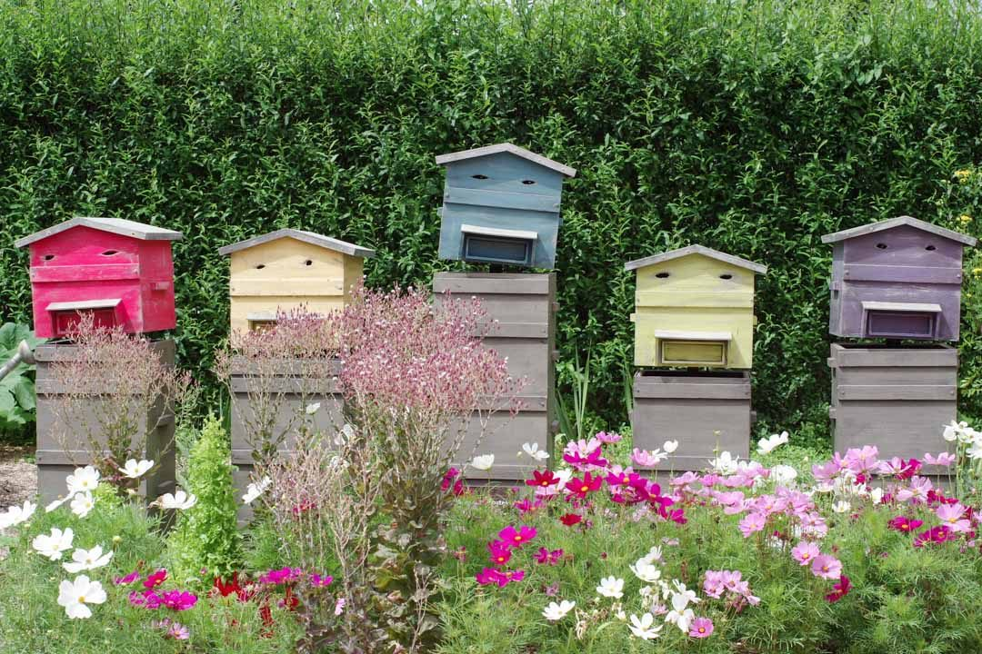 les ruches qui chantent - Terra Botanica