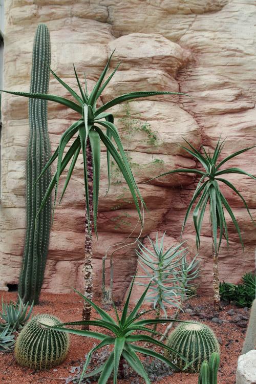 Serre des Cactus - Terra Botanica