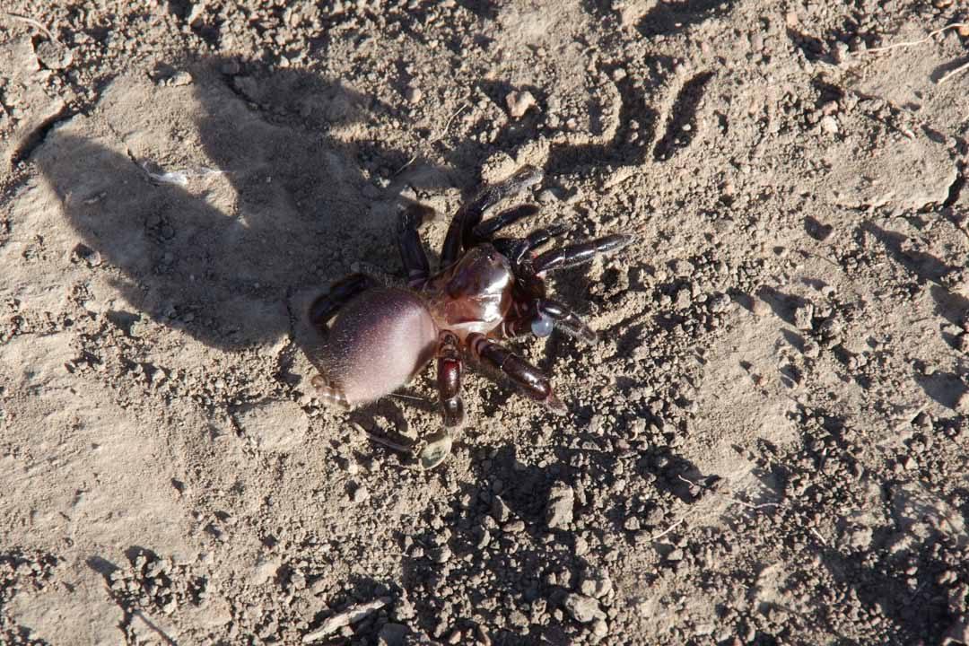 Araignée dans le parc Hluhluwe