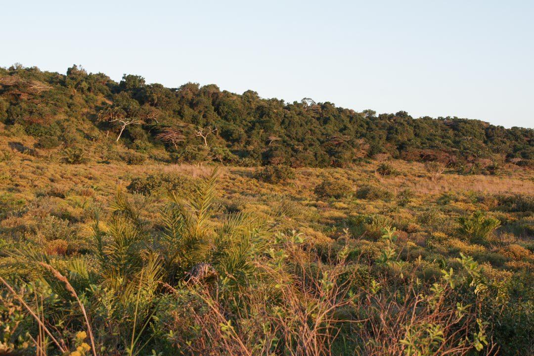 le paysage de la réserve d'isimangaliso Wetland Park