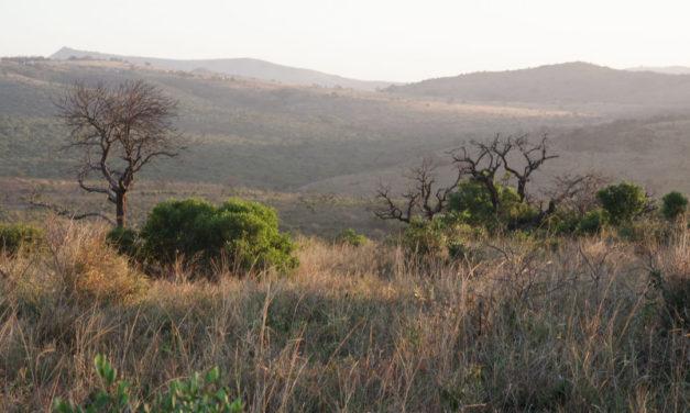 Safari dans le parc de Hluhluwe-iMfolozi