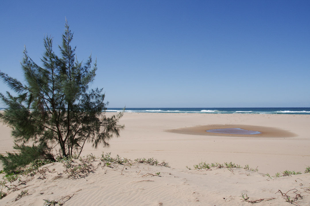 la plage immense de Santa Lucia - Afrique du Sud