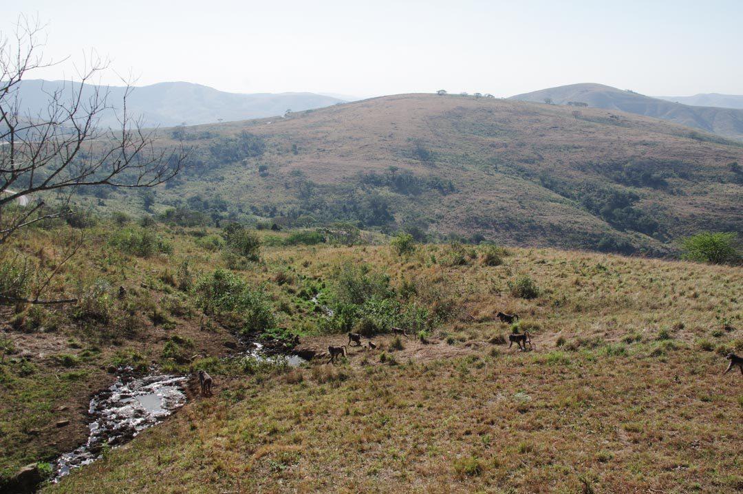 panorama depuis la terrasse du Hilltop Rest Camp