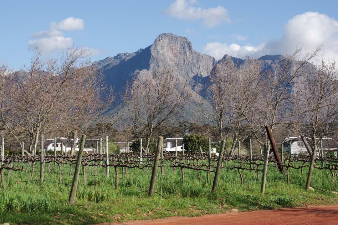 Paysage de la route des vins d'Afrique du Sud