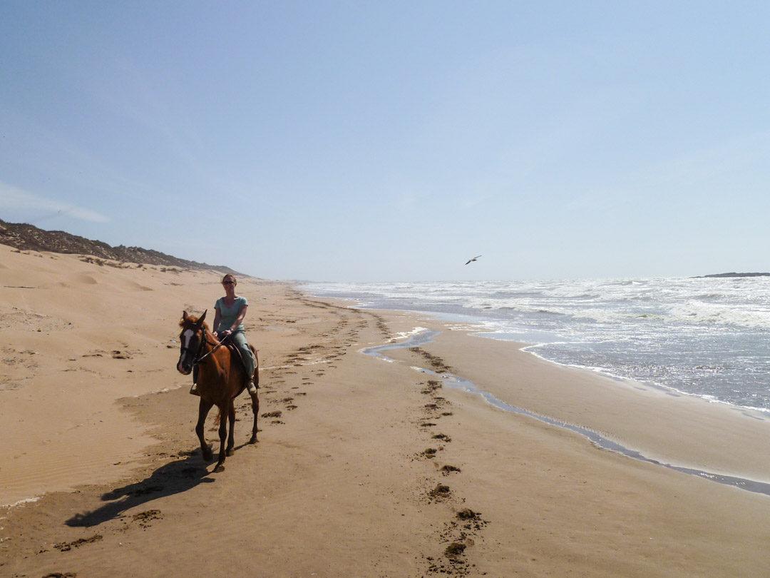 balade à cheval sur la plage d'essaouira