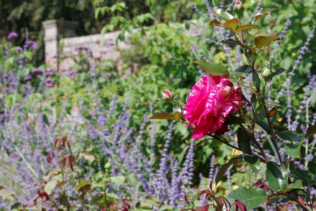 Jardin de Mesnil Geoffroy - Roseraie des Parfums