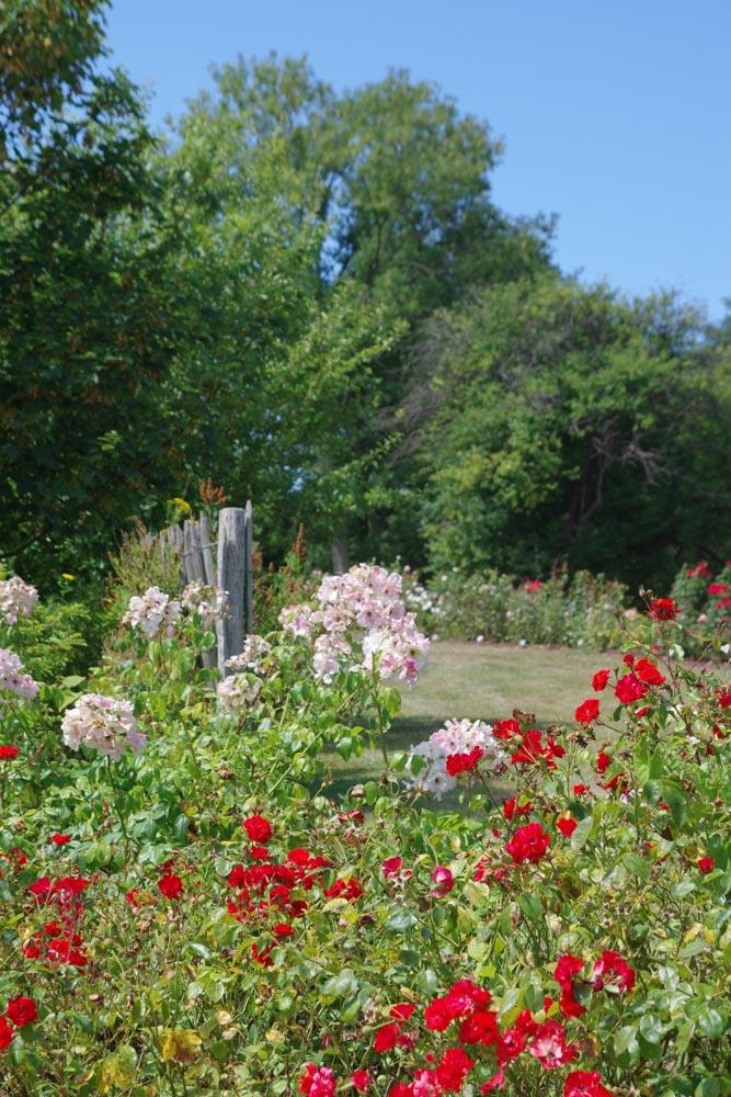 la roseraie des jardins suspendus de Sainte Adresse