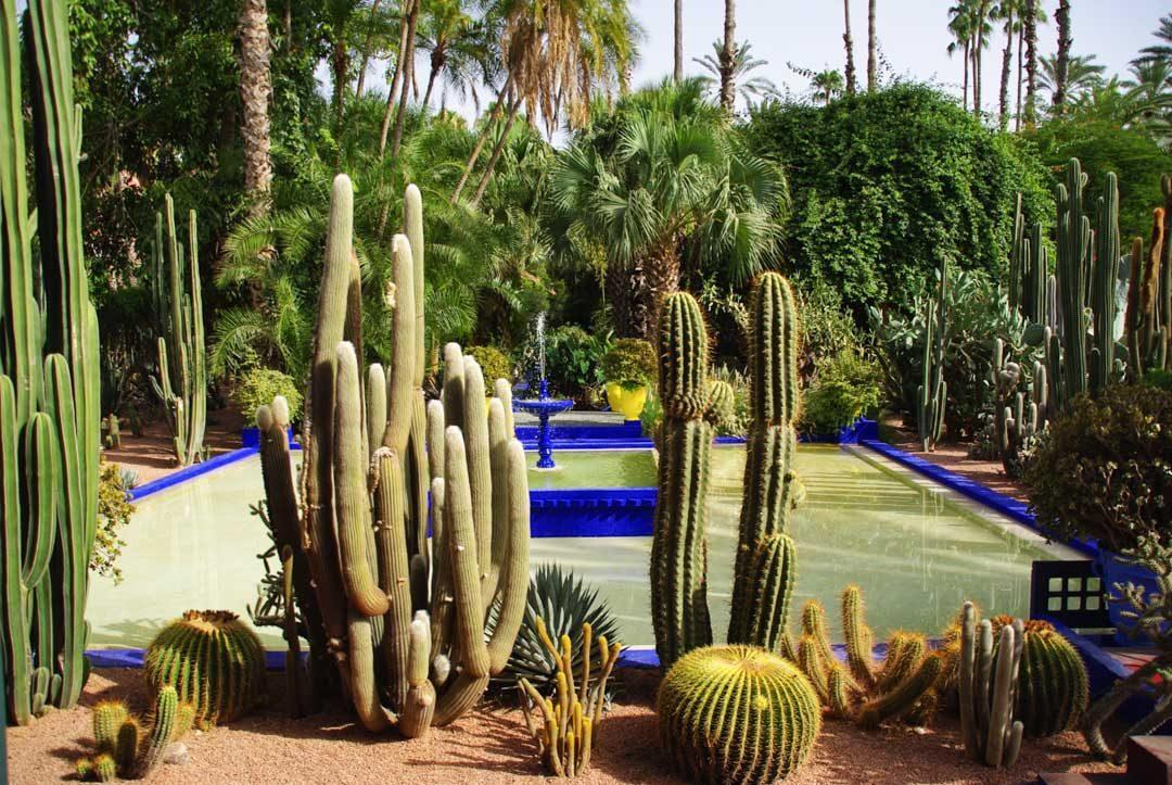 bassin du jardin majorelle