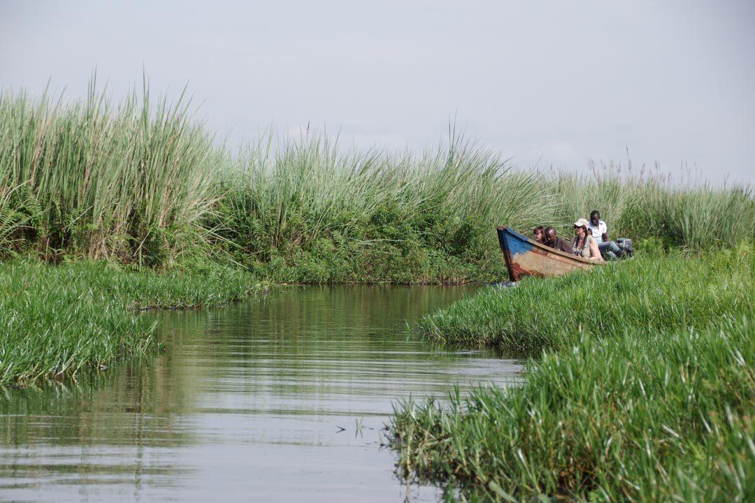 Balade en bateau dans les marais de Mabamba