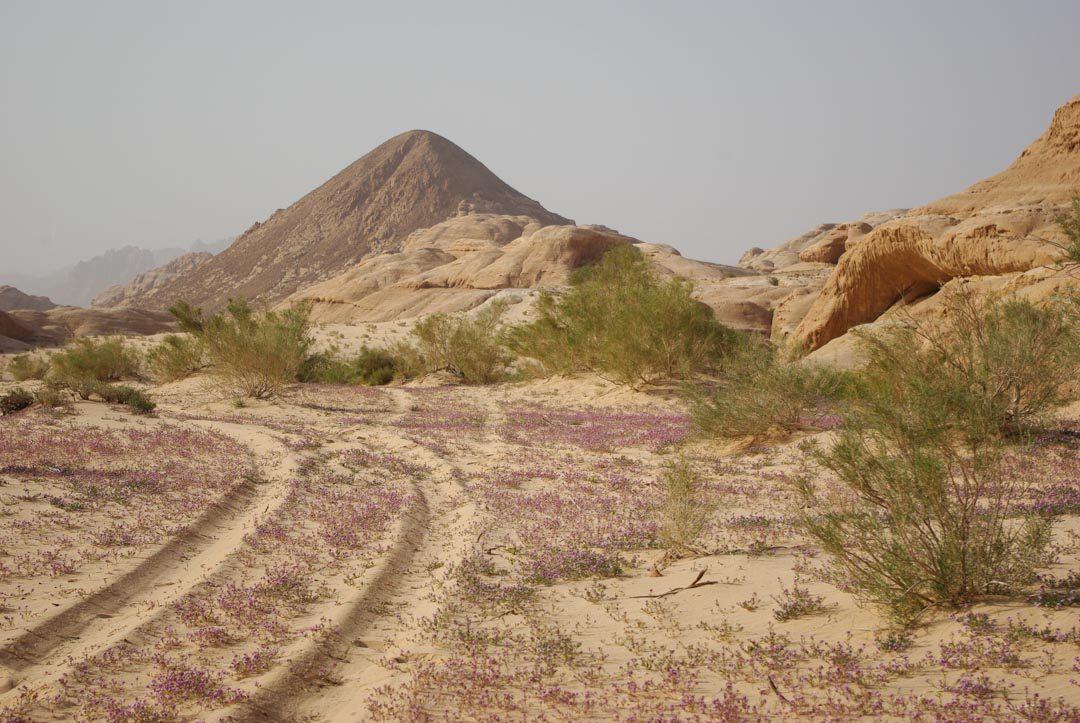 paysage du désert du Wadi Rum