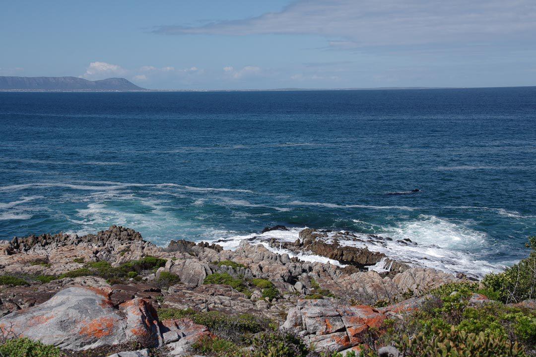 Voir les baleines depuis le rivage à Hermanus