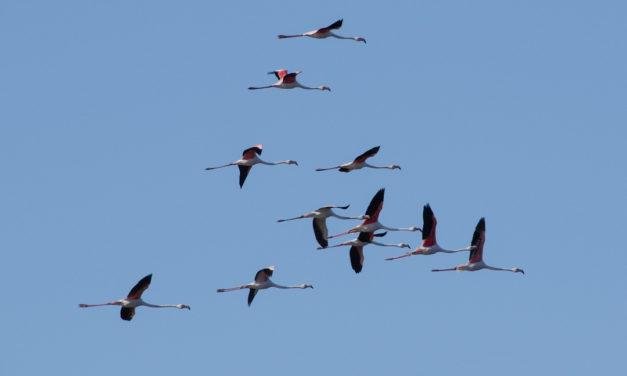 La réserve ornithologique du Bagnas