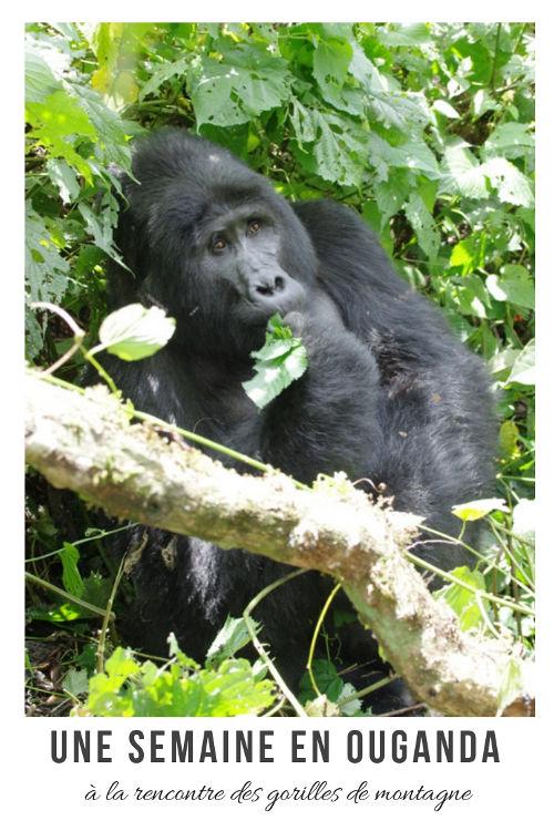 Itinéraire d'une semaine en Ouganda pour aller voir les gorilles des montagnes.