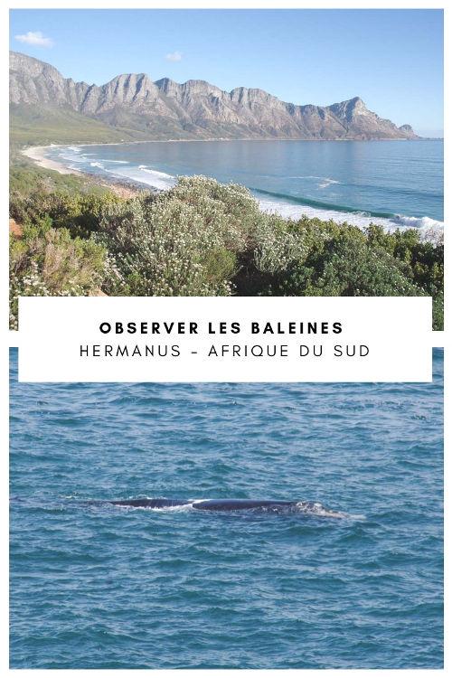 Hermanus : l'un des meilleurs endroits pour observer les baleines en Afrique du Sud