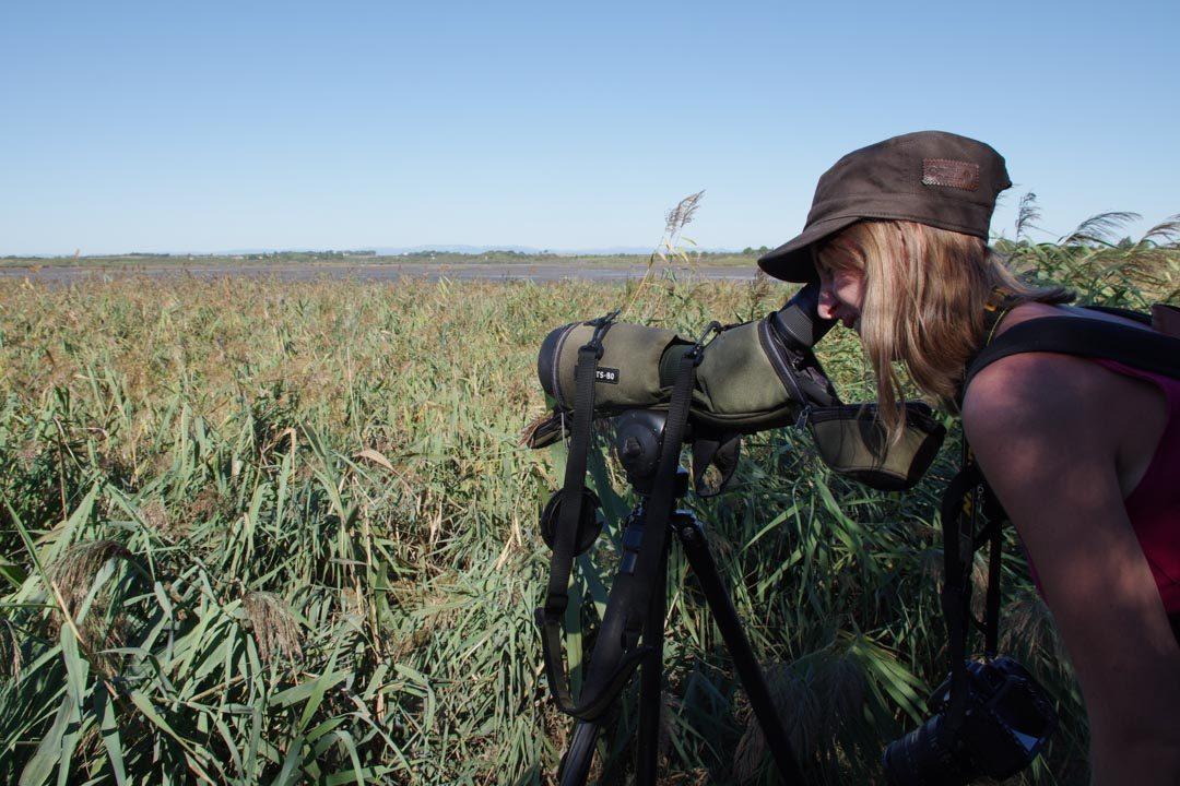 observer les oiseaux avec la longue vue