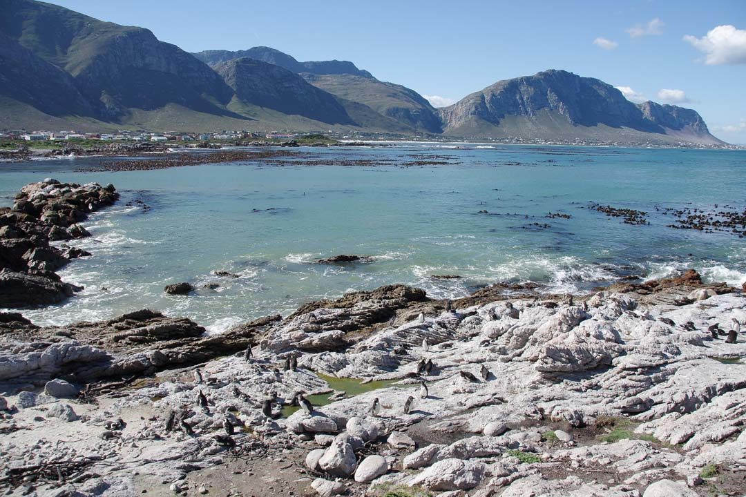 Penguin Nature Reserve - Betty's Bay