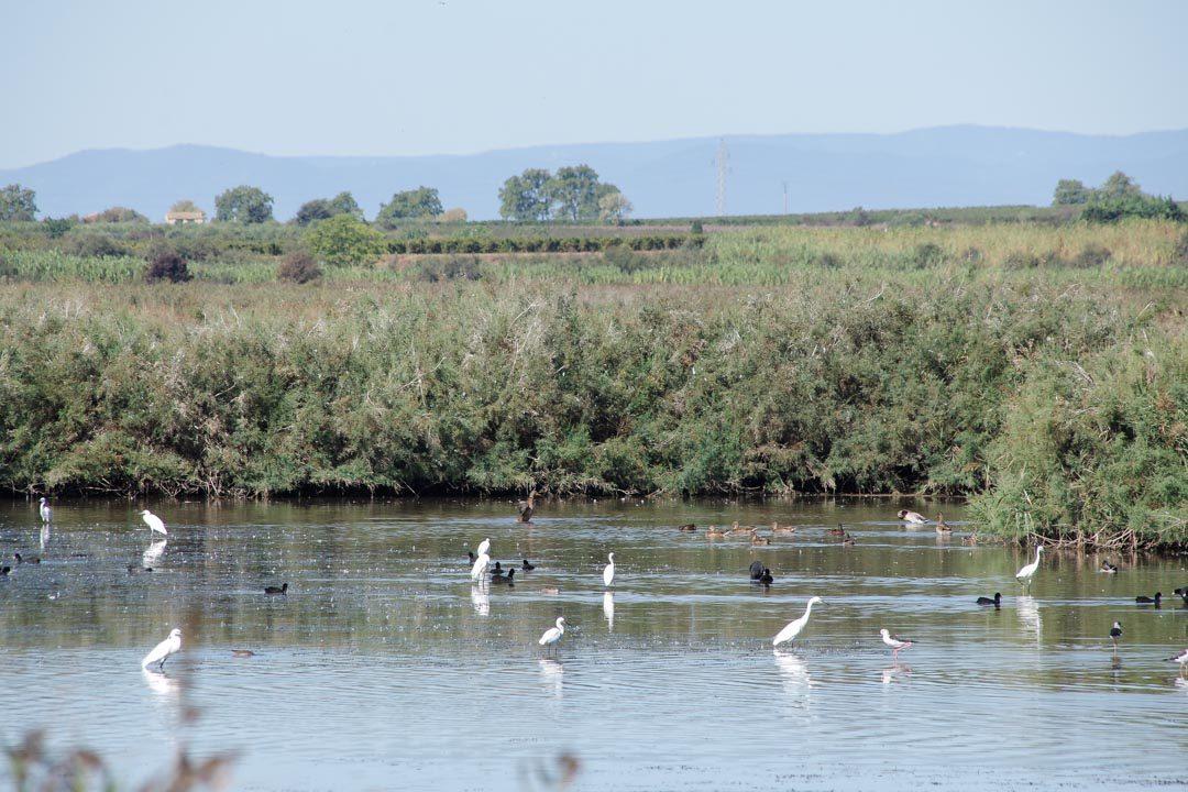Réserve ornithologique du Bagnas dans l'Herault