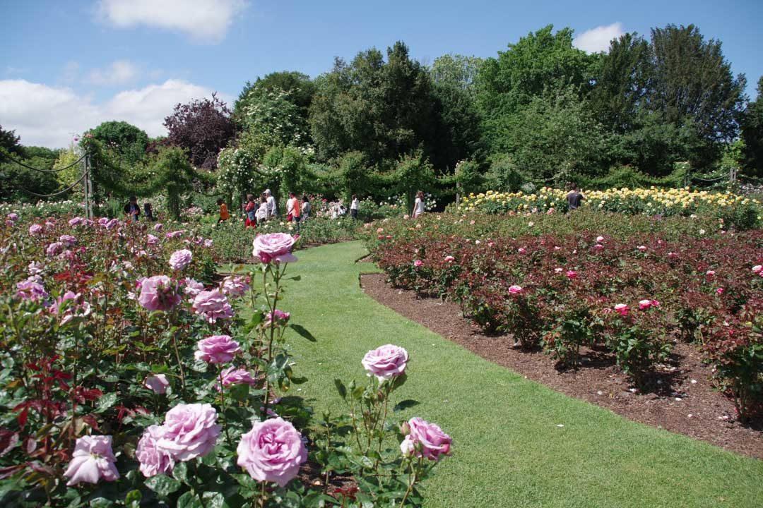 Roseraie de Regent's Park - Londres
