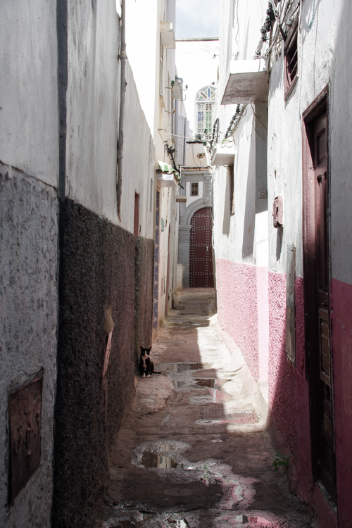 Un chat dans les ruelles de la Médina de Salé